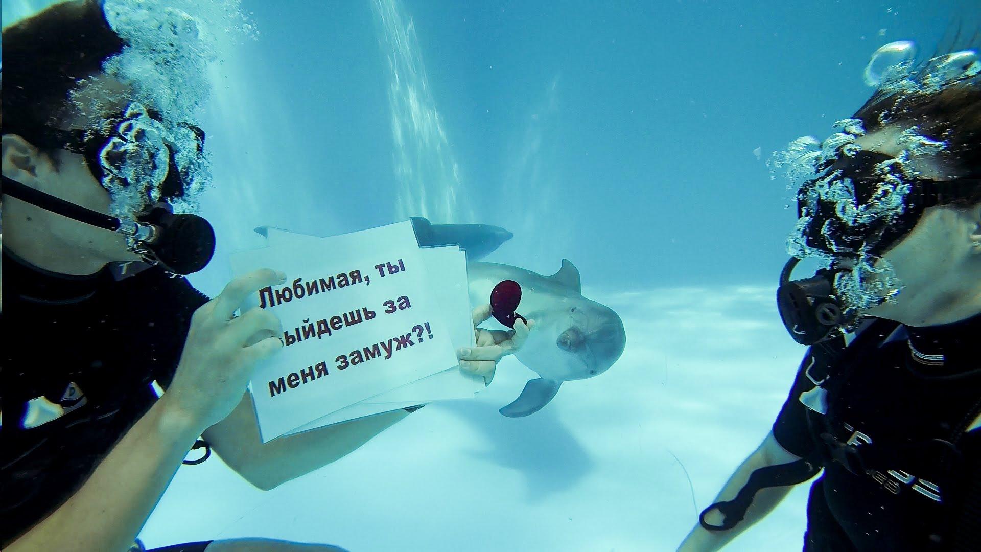 предложение в дельфинарии